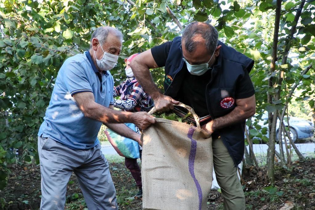 VALİ SONEL, İŞCİLERLE BERABER FINDIK TOPLADI